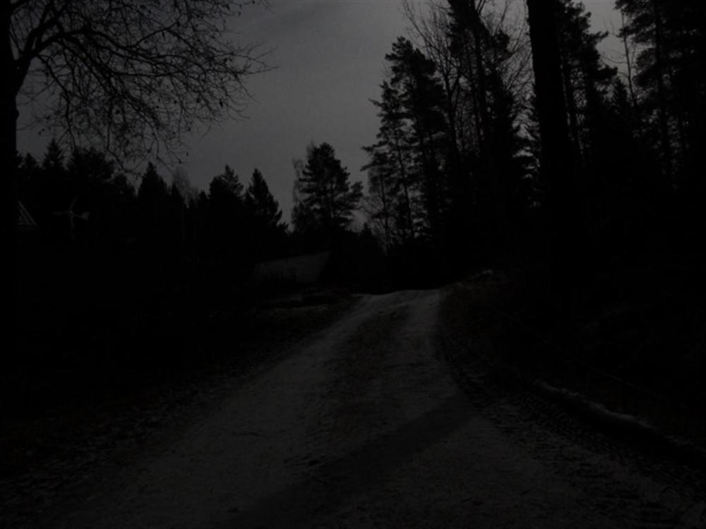 Nachts_im_Wald_Dezember_11 (1).jpg