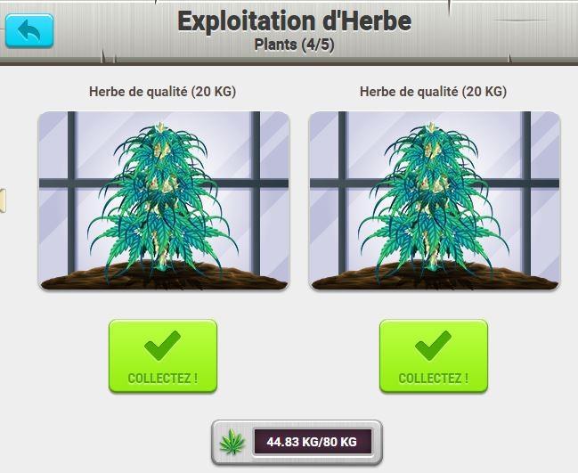 exploitation-herbes-plantation.JPG