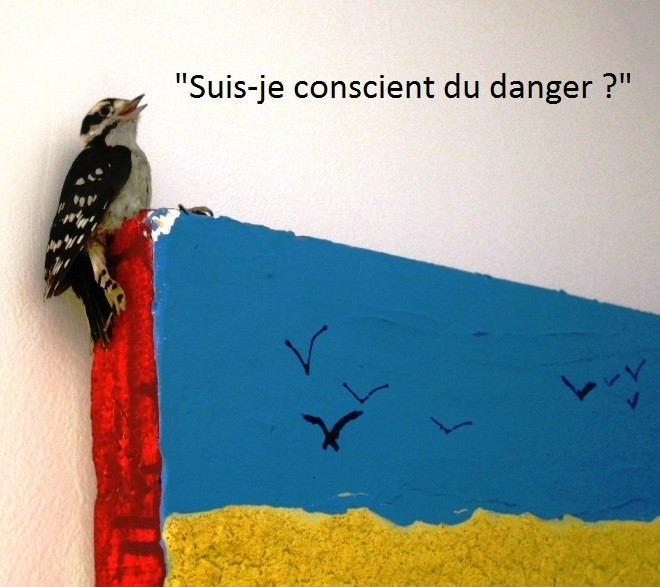 oiseau_art_conscience.jpg
