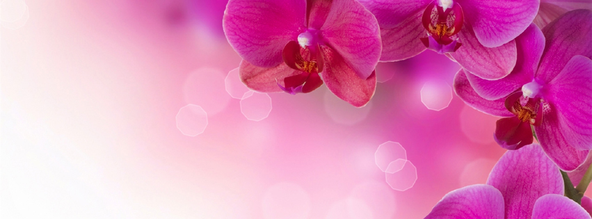 Photo De Couverture Paysage Fleurs Couverture Facebook Fleur De