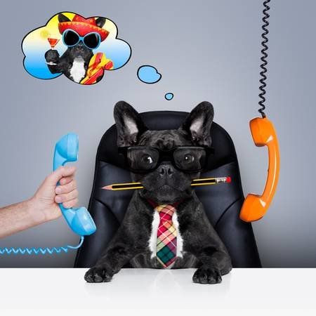 49546187-oficina-de-negocios-francés-bulldog-como-jefe-y-jefe-de-cocina-ocupado-y-el-agotamiento-sentado-en-la-.jpg