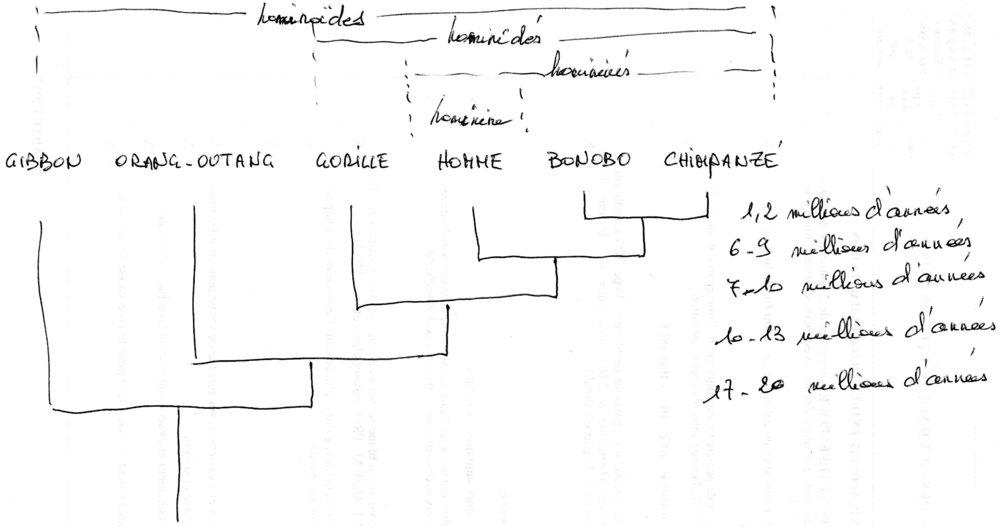 Tableau de l'évolution des espèces.jpg
