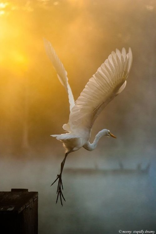 a966f14ffcaeb2f39122b9364e1d88e6--amazing-grace-amazing-nature.jpg