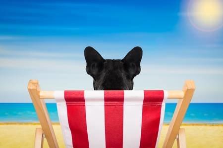 52998044-francés-bulldog-en-una-silla-de-playa-o-una-hamaca-en-la-playa-de-relax-en-las-vacaciones-de-vacacione.jpg