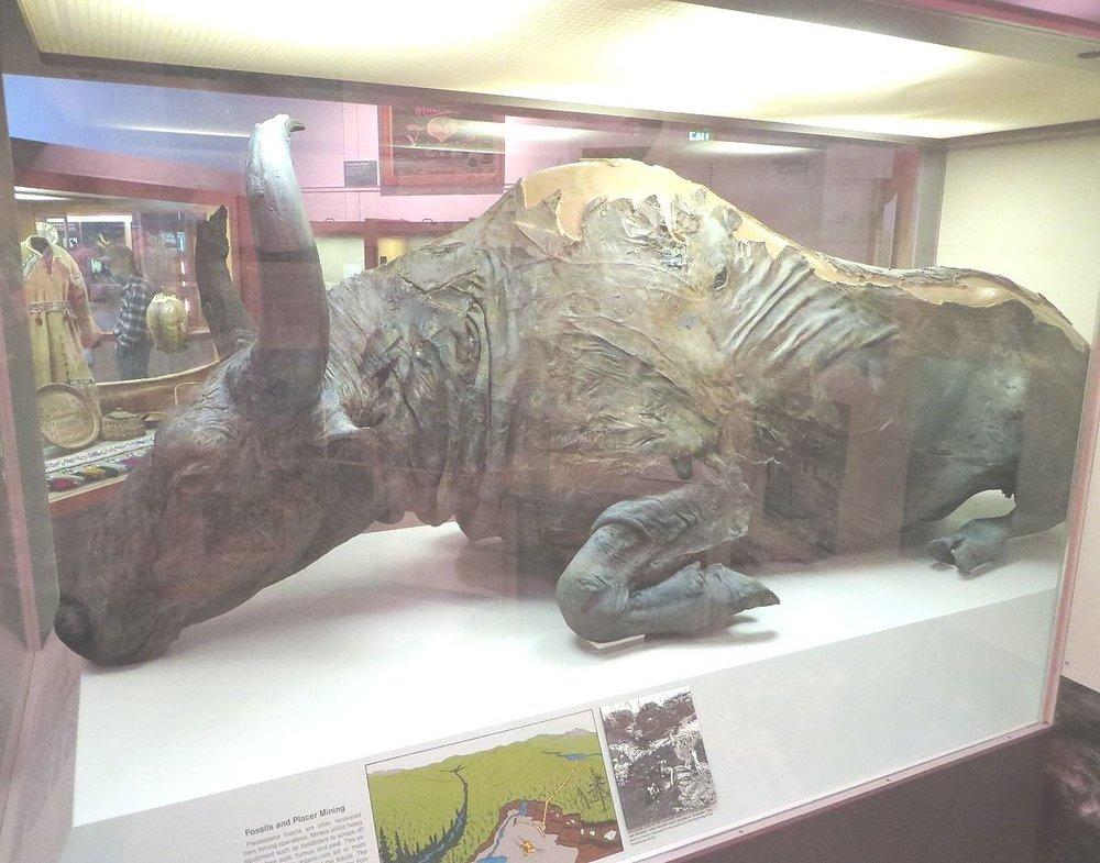 Steppe_bison_mummy.jpg