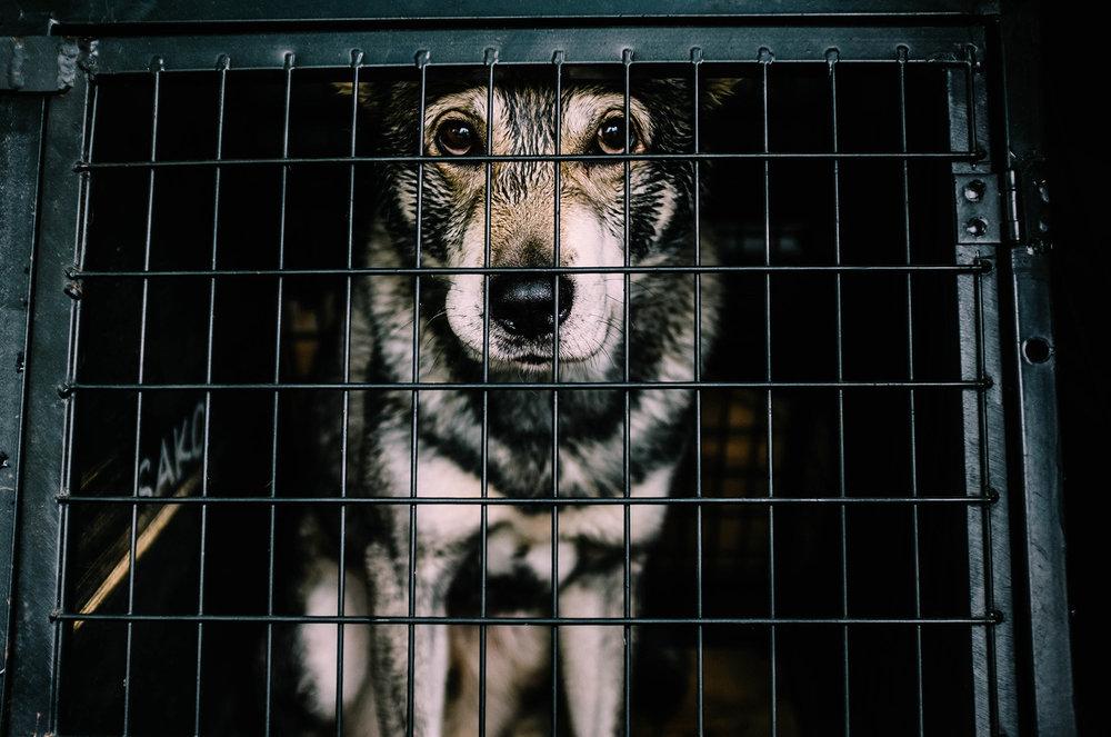 chien-cage-1.thumb.jpg.d952b48bfb652097f4658576756f212d.jpg