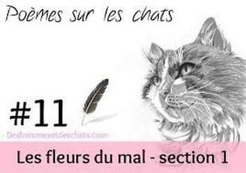a1 le chat de Charles Beaudelaire..jpg
