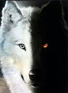 Quizz autour du loup.