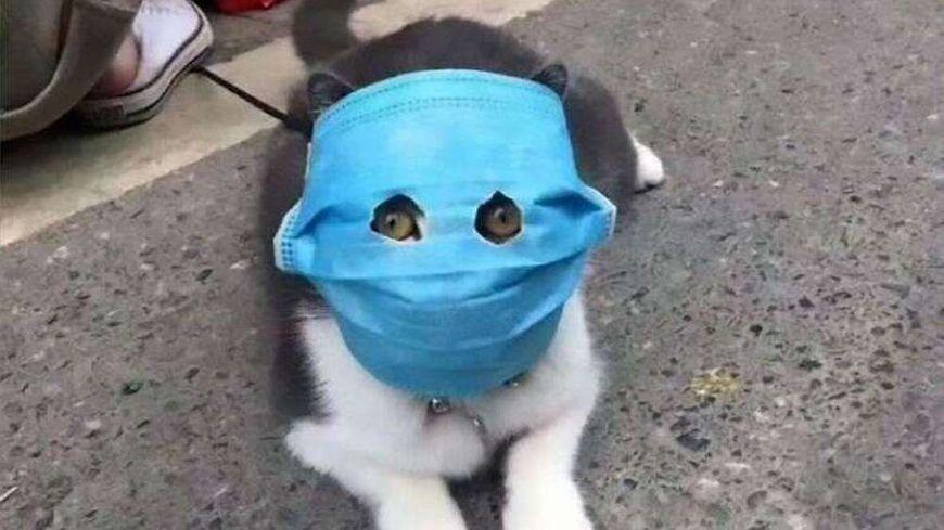 chat masqué.jpg