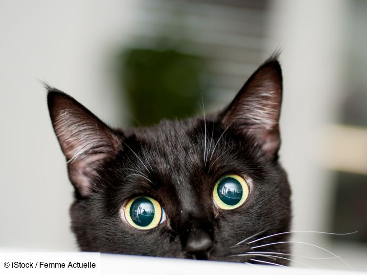 chat noir.jpeg