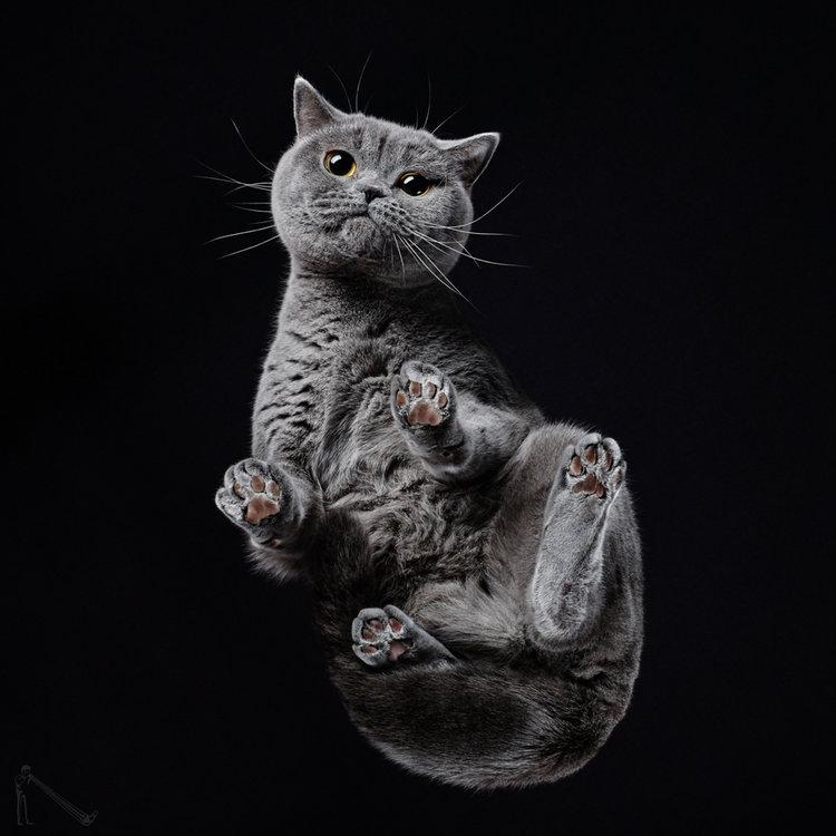 Andrius_Burba_grainedephotographe.com_Under-Cats-5.jpg