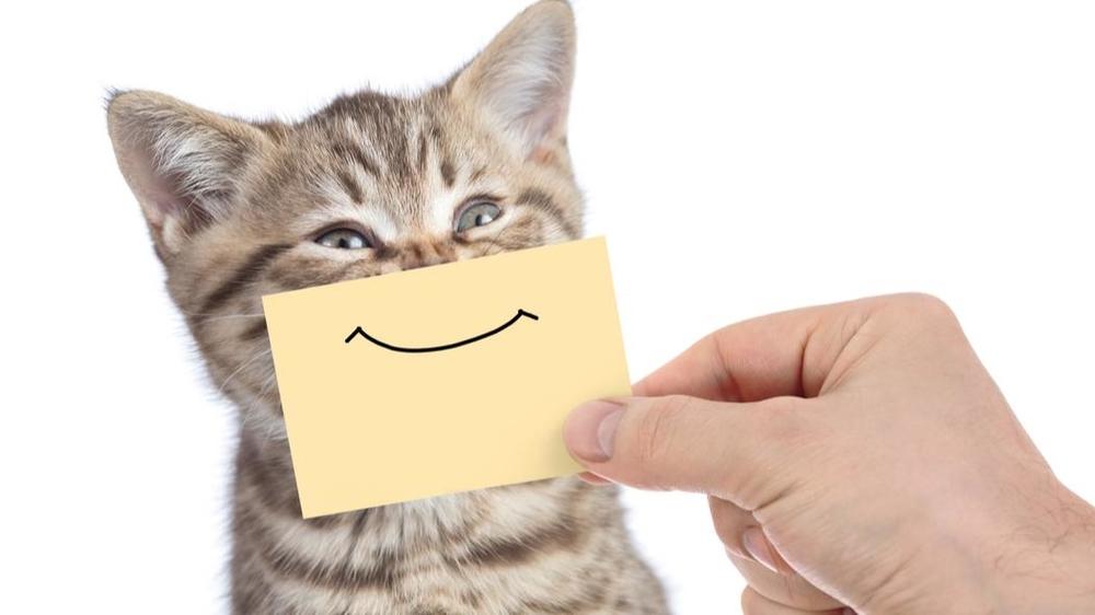 chat-avec-sourire.jpg
