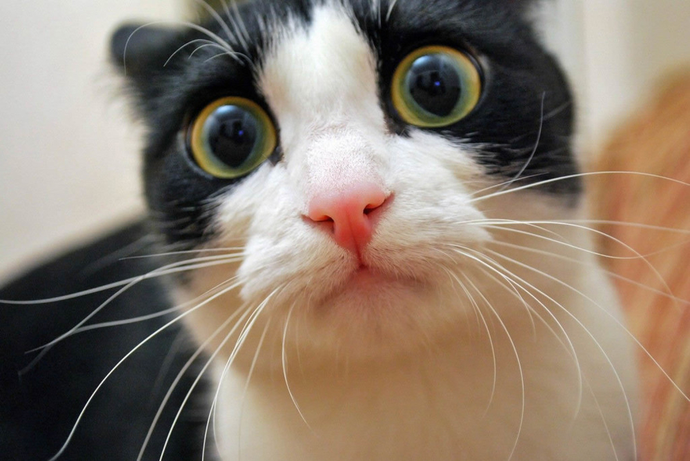 chat-qui-a-peur-1024x685.jpg