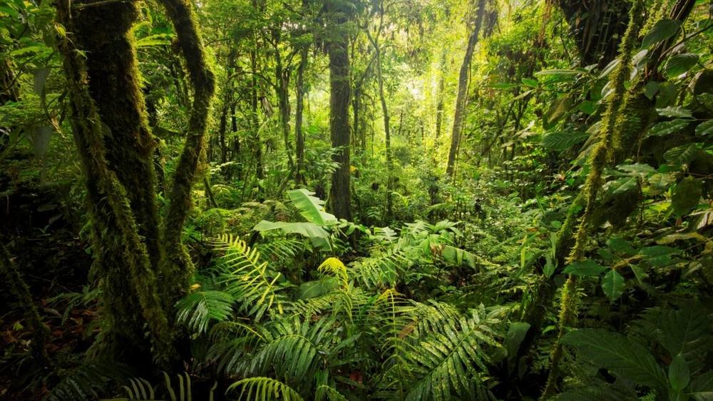 les-forets-primaires-des-ecosystemes-en-voie-d-extinction.jpg